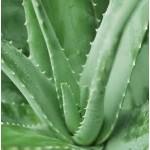 Aloe Vera Oil (CANADA)