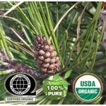 Pine Essential Oil Organic