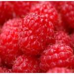 Raspberry Seed Oil Virgin