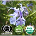 Rosemary Essential Oil Organic