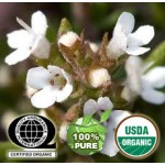 Thyme Essential Oil Organic