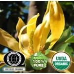 Ylang Ylang Essential Oil Organic