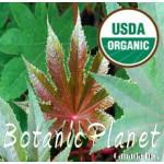 Castor Seed Oil ORGANIC (INDIA)