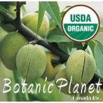 Almond Sweet Oils ORGANIC