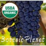 Grape Seed Oil ORGANIC (ITALY)