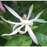 Champaka Floral Water