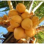 Coconut Oil RBD (PHILIPPINES)