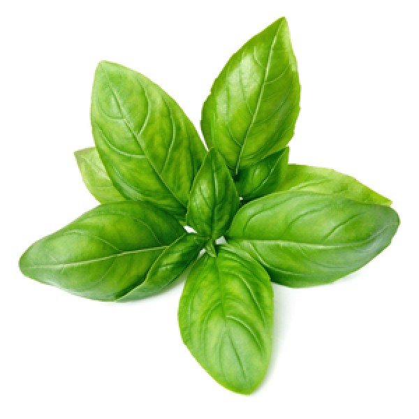 Basil Essential Oil (France)