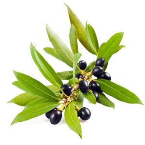 Bay Leaf Essential Oil (Morocco)