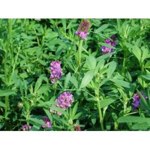 Alfalfa Herb S.E 5percent