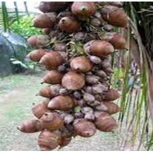 Babassu Oil (BRAZIL)