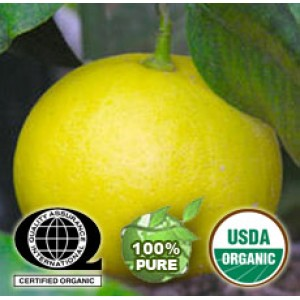 Bergamot Essential Oil ORGANIC