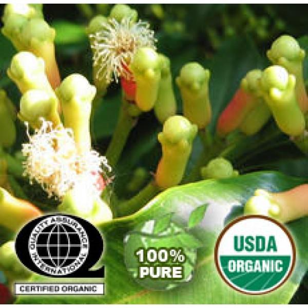 Clove Bud Essential Oil Organic