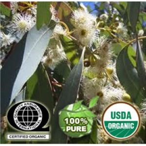 Eucalyptus Globulus Oil Organic
