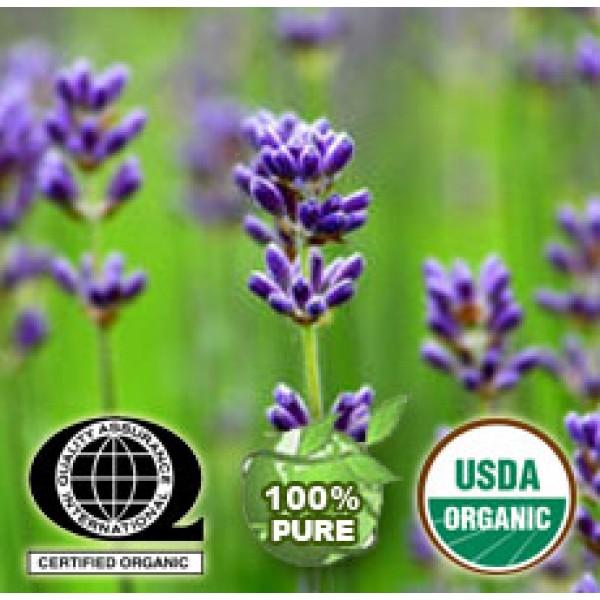 Lavender Essential Oil Organic