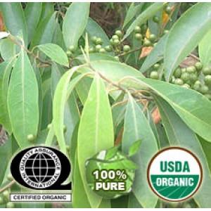 Litsea Cubeba Oil Organic