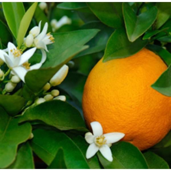 Orange Flower Absolute 5percent