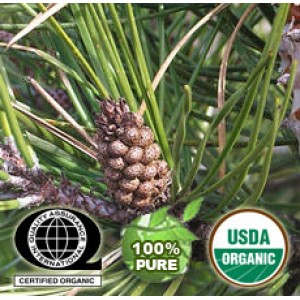 Pine Essential Oil Organic