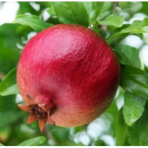 Pomegranate Oil (Refined)