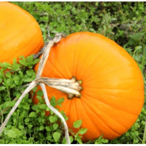 Pumpkin Seed Oil (USA)