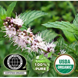 Spearmint Essential Oil Organic
