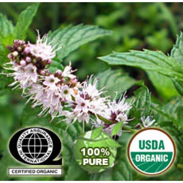 Spearmint Essential Oil Organic