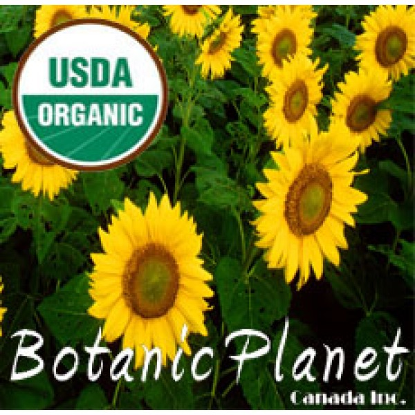Sunflower Oil ORGANIC