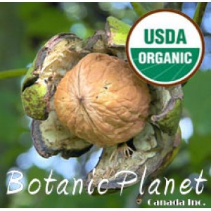 Walnut Oil ORGANIC (USA)