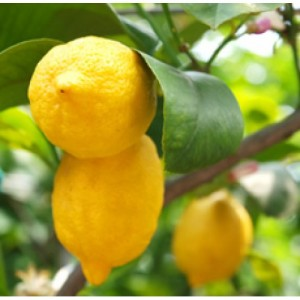 Lemon Essential Oil (Italy)