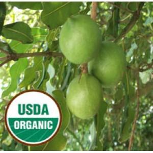 Macadamia Nut ORGANIC