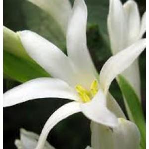 Tuberose Floral Water